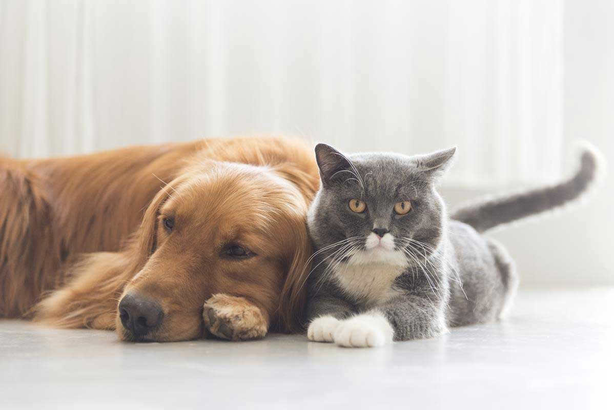 about our veterinary practice Portland, IN